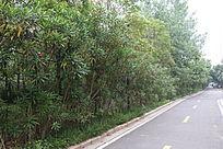 路边的一排树