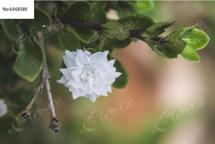 绿叶下的一朵白色小花朵