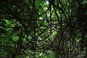 密密麻麻的树林摄影
