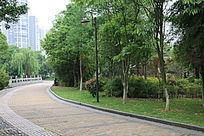 人行道边上的树林