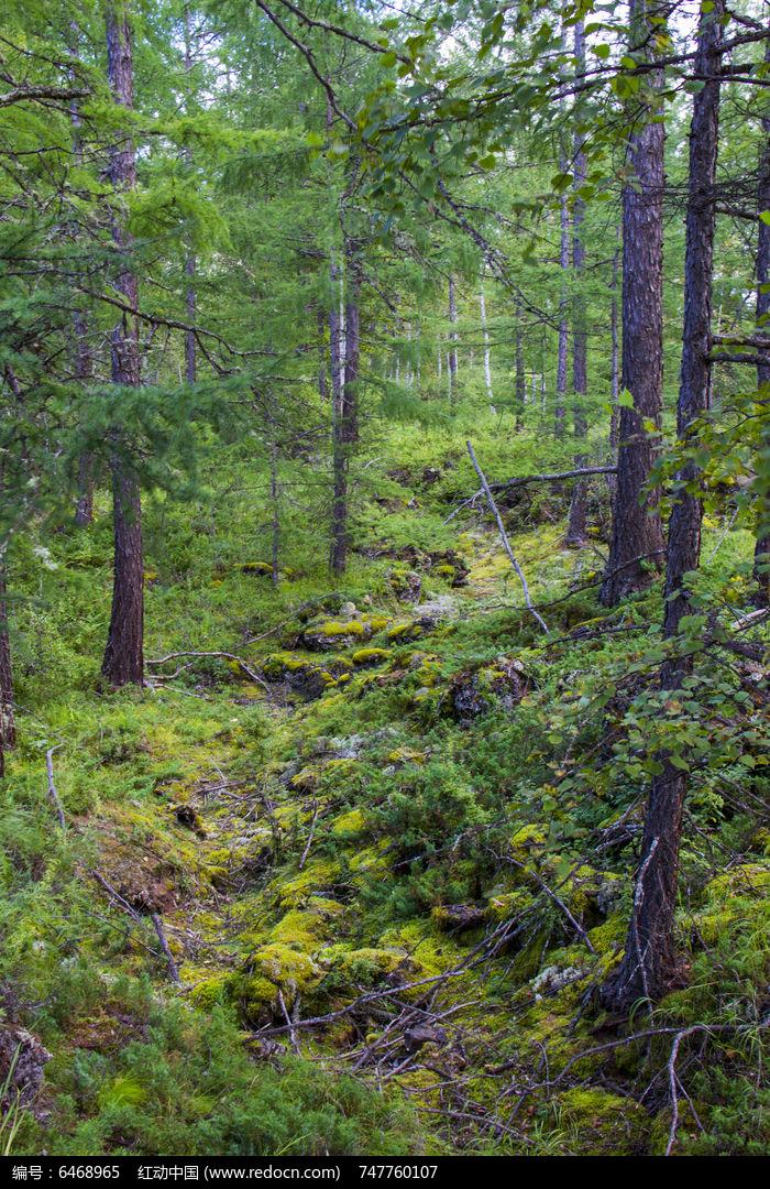 原创摄影图 动物植物 树木枝叶 森林