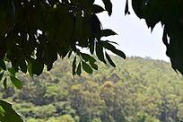 树林绿叶摄影