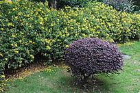 紫色别后的黄色花卉
