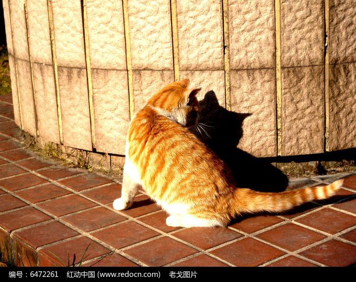 晒太阳的猫图片