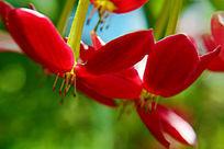 鲜艳的红色花卉