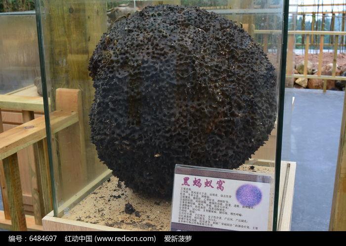 蚂蚁巢图片结构图