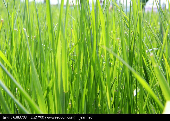 原创摄影图 动物植物 花卉花草 绿草