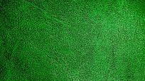 绿色皮纹背景