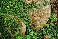 园林石植被
