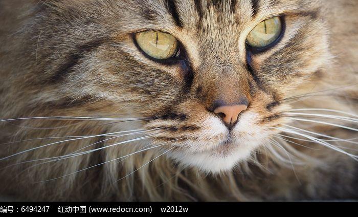 一张猫脸图片,高清大图
