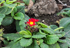 几朵小红花