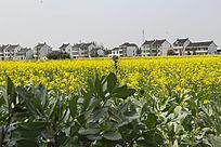绿叶花海乡村