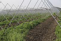 生态大棚农业