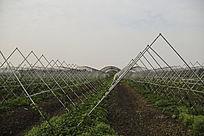 生态农业基地