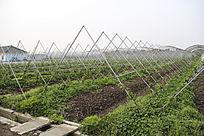 现代生态农业园