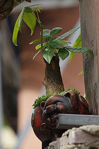 小熊发财树
