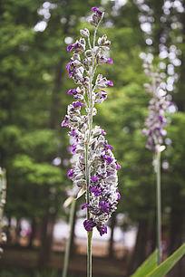 一串紫色小花朵