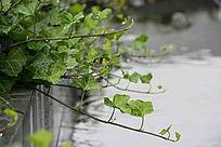 静物绿叶植被