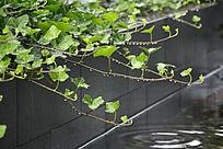 绿色植物娇翠欲滴