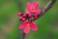 美丽动人的红色花