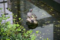 水池边绿色植物