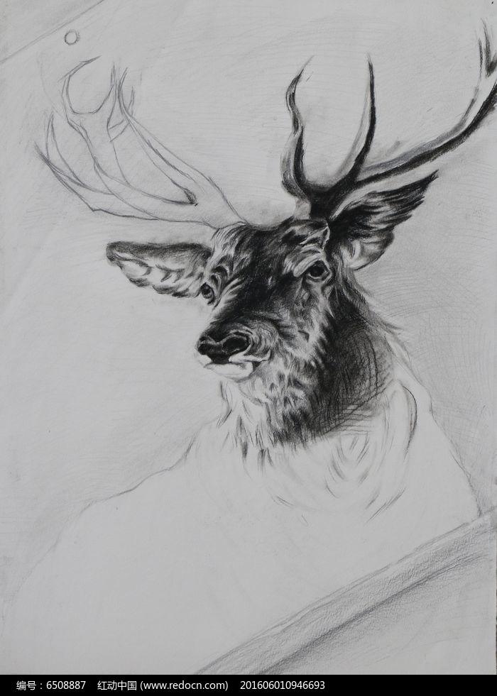 素描鹿头图片