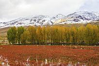 雪山下的红草地