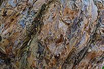 卷起的木纹