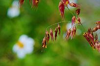 粒粒的小野花