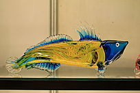 五彩斑斓的琉璃鱼