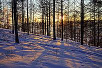 雪原松林落日