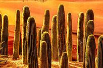 阳光中的沙漠植物萨瓜罗仙人掌平拍