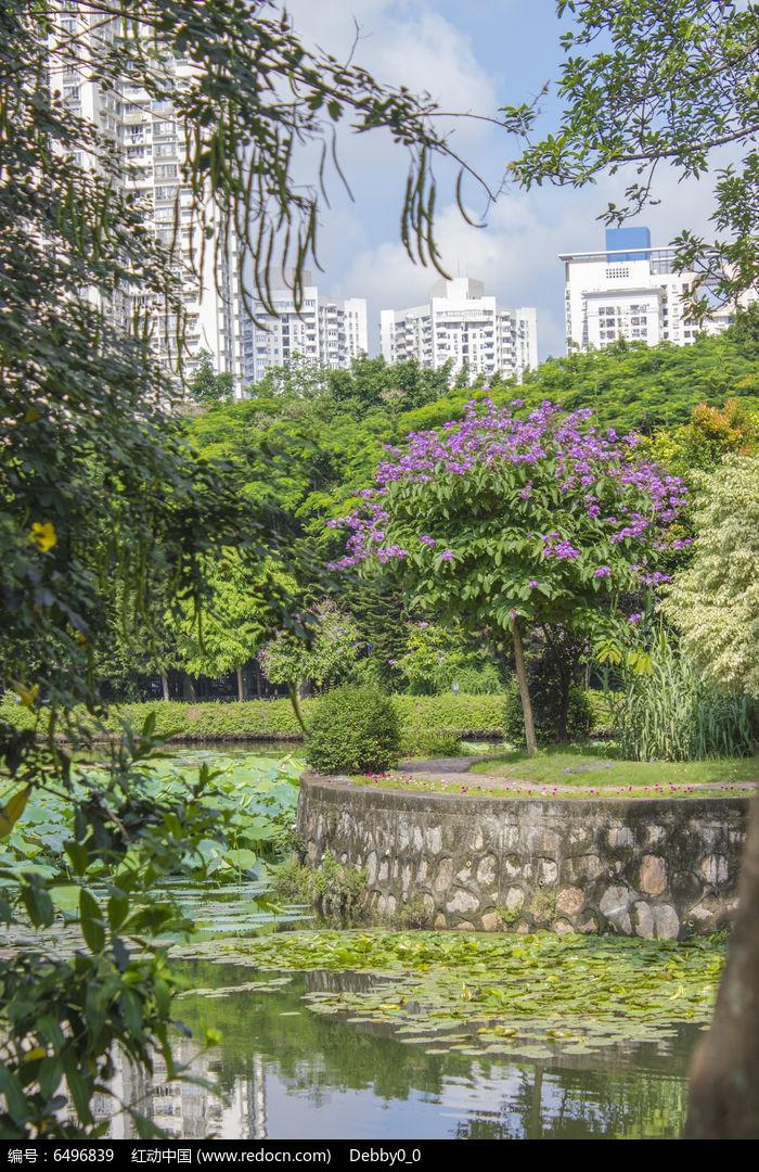 深圳大学荷花池一角图片