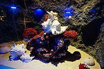 大法螺贝壳