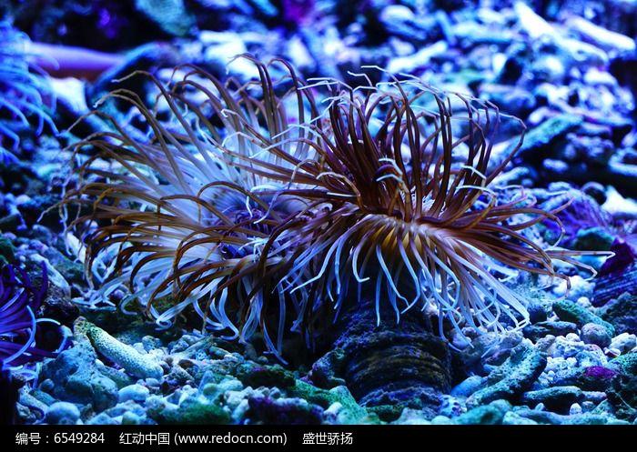 海底草生物图片