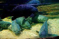 海底生物世界