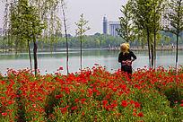 红花与美女