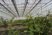 绿色大棚农业