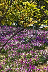 绿荫下的花海