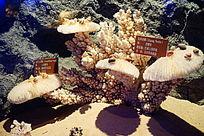 珊瑚礁贝壳