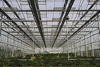 现代农业大棚