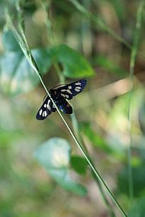 小草上的蛾子