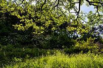 初夏时光之山楂树下