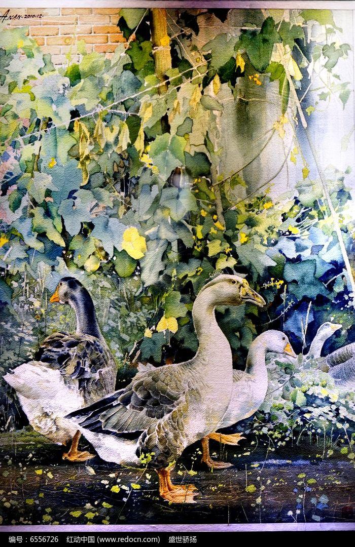 鹅水彩画图片