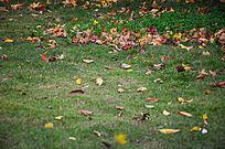 秋天草地上红色的落叶