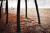 秋天的湖岸边树林下落满了红叶