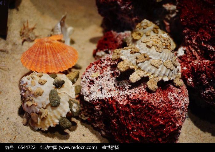 原创摄影图 动物植物 水中动物 扇贝螺  请您分享: 素材描述:红动网图片