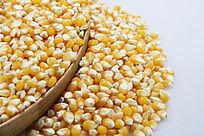 玉米种特写