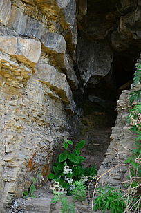 洞口的野花