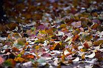 秋风吹落地面上的树叶